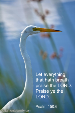 Free Printable Scripture Bookmark_Psalm 150_6_2pt6X4_For Web
