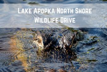 Lake Apopka North Shore Wildlife Drive Photos