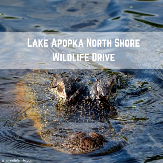 PHOTOS: Lake Apopka North Shore Wildlife Drive In Central