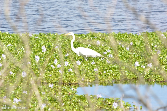 Lake Apopka North Shore Wildlife Drive_Nikon_10