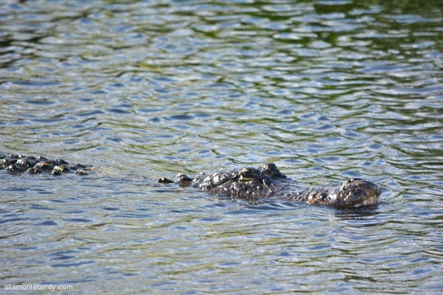 Lake Apopka North Shore Wildlife Drive_Nikon_3