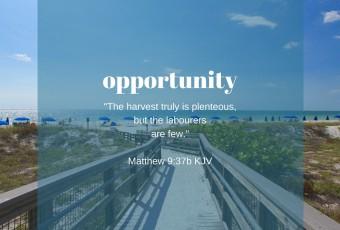 Seeking Opportunities