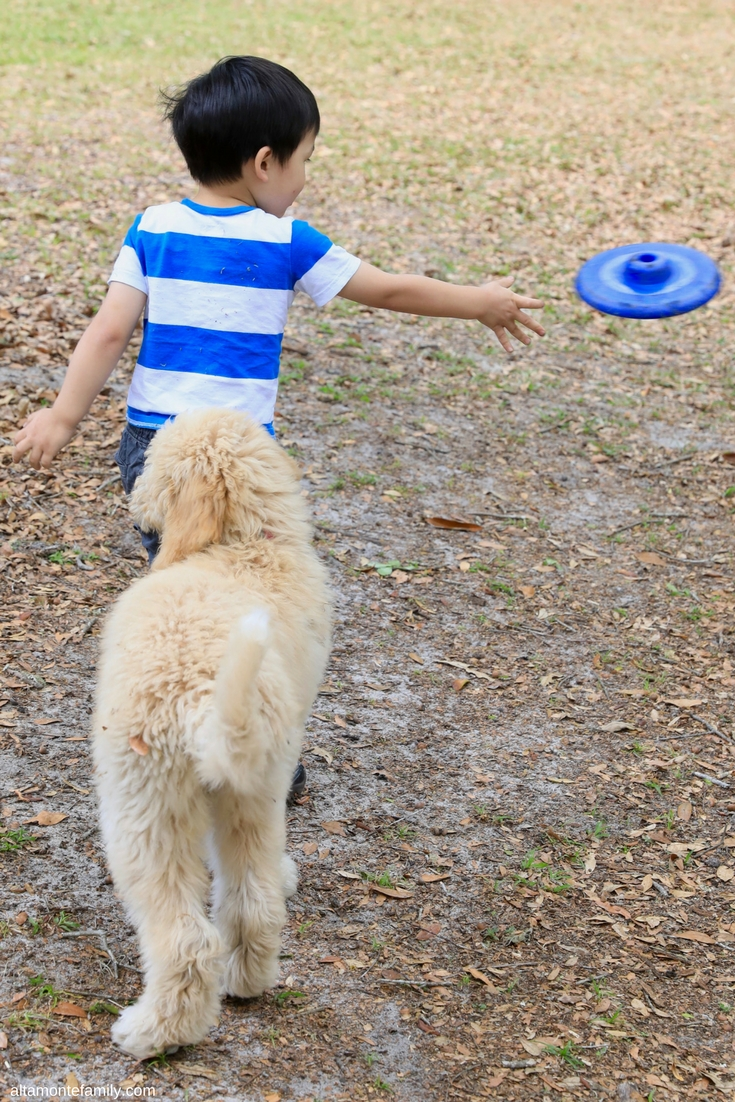 Goldendoodle Puppies With Kids - Benefits Of Dog Ownership
