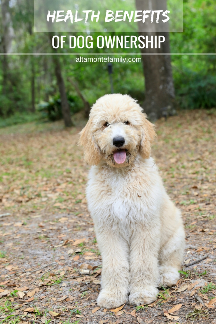 Health Benefits Of Dog Ownership - F1BB Goldendoodle Puppies