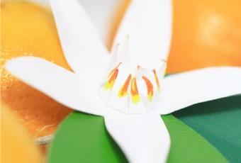 DIY Citrus Flower Garland