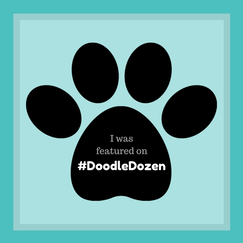 #DoodleDozen Featured Dogs and Puppies of Instagram