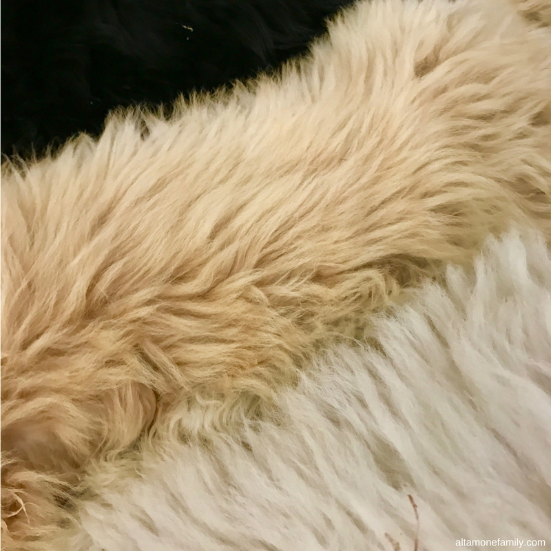 F1BB Goldendoodle Coat - White, Cream, and Black