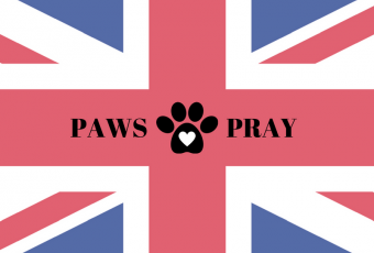 Paws & Pray For Manchester – #DoodleDozen Week 8