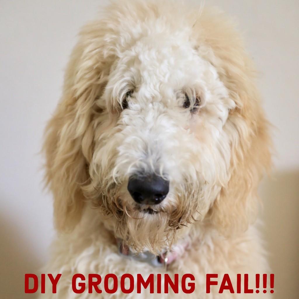 DIY Pet Grooming Fail - Goldendoodle - Labradoodle - Dog