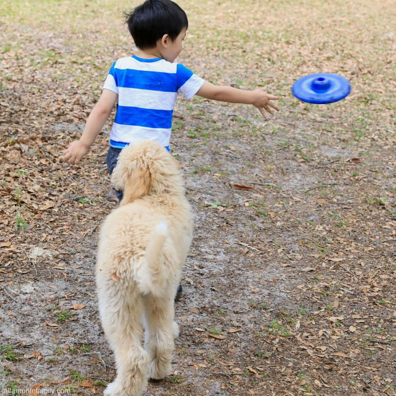 Dogs and Kids Playing Frisbee