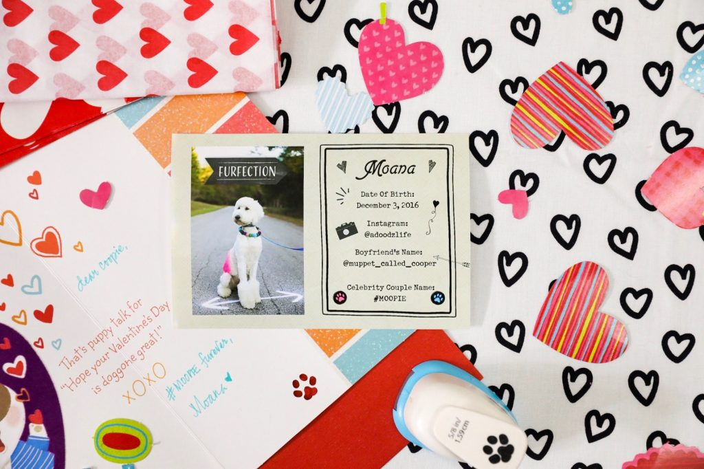 Valentine's Day For Dogs - Puppy Love - Ideas