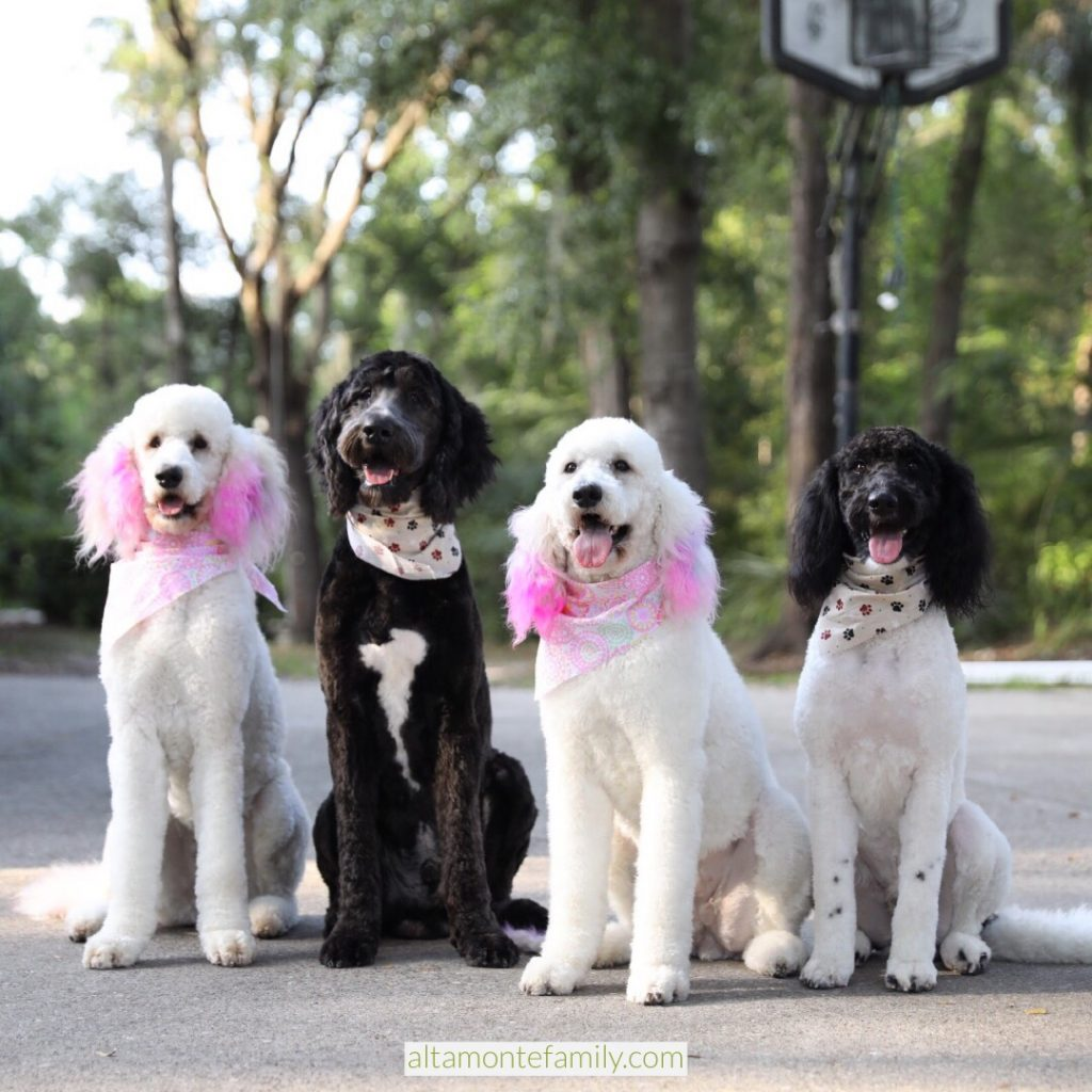 Stylish Dog Trends Hair Coloring Dye Unicorn Pink Purple